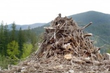Turning-Slash-Piles-to-Soil-Benefit